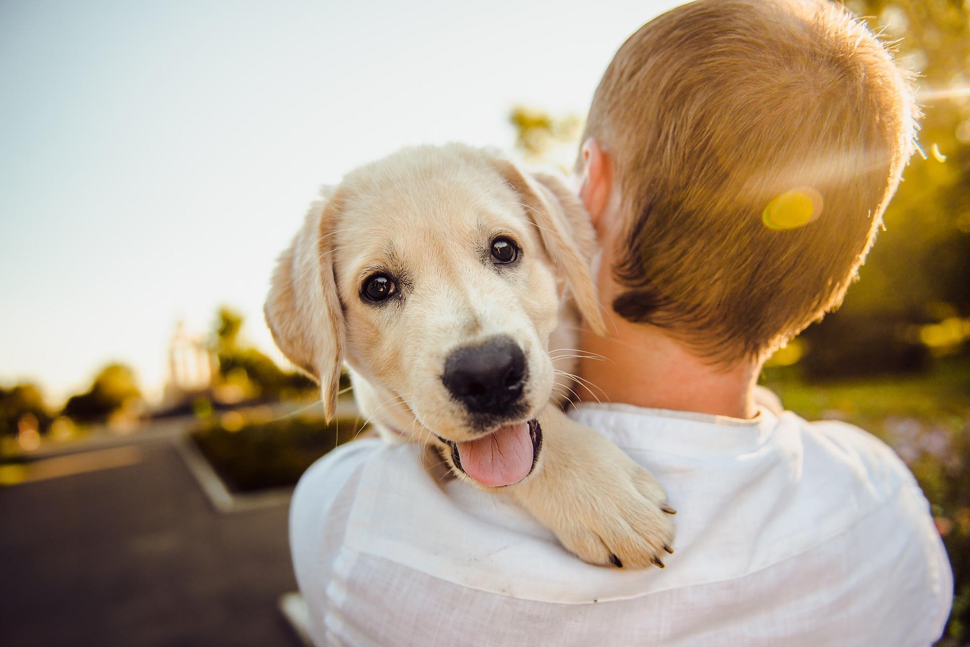 Come accogliere un cane in casa